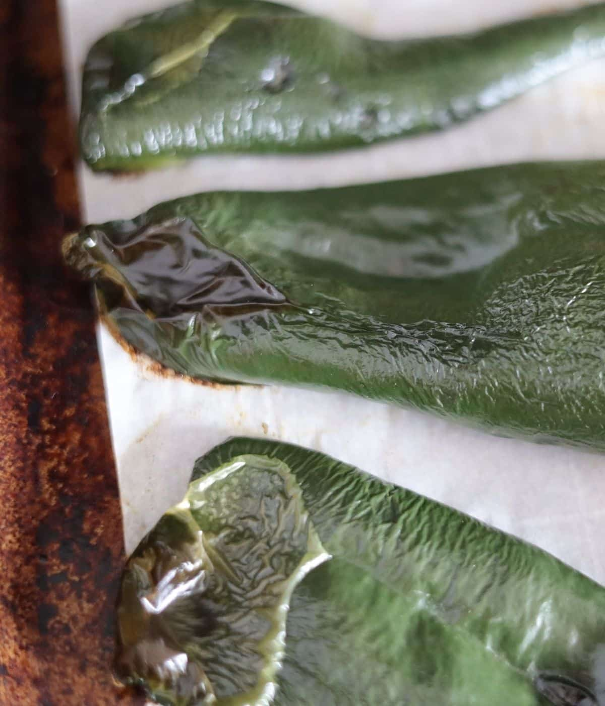 roasted charred poblano peppers on a baking sheet